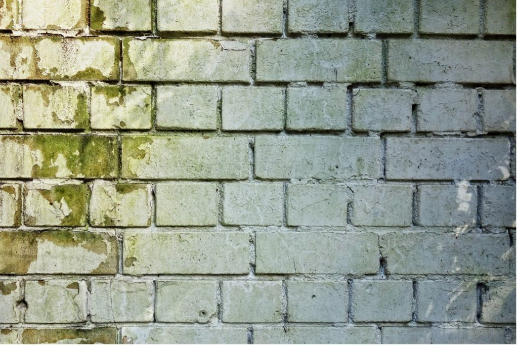 A close-up of a brick wall with green mold growing on it